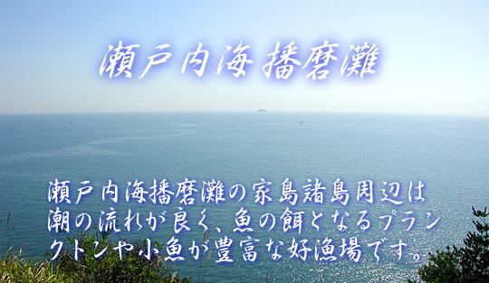 瀬戸内海播磨灘の上質な天然魚介類