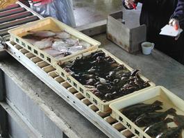 魚は生きたまま仕入れます。