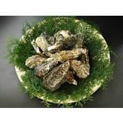 瀬戸内産 殻付き牡蠣 2kg 送料無料