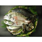 瀬戸内海の天然魚介類セット(6~8人分)