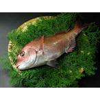 瀬戸内産 天然真鯛 1.5kg前後